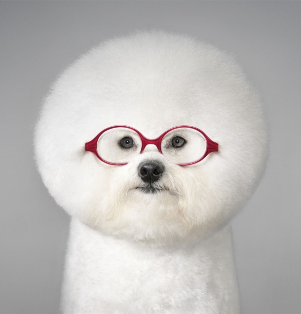 Tim Flach for Grand Optical